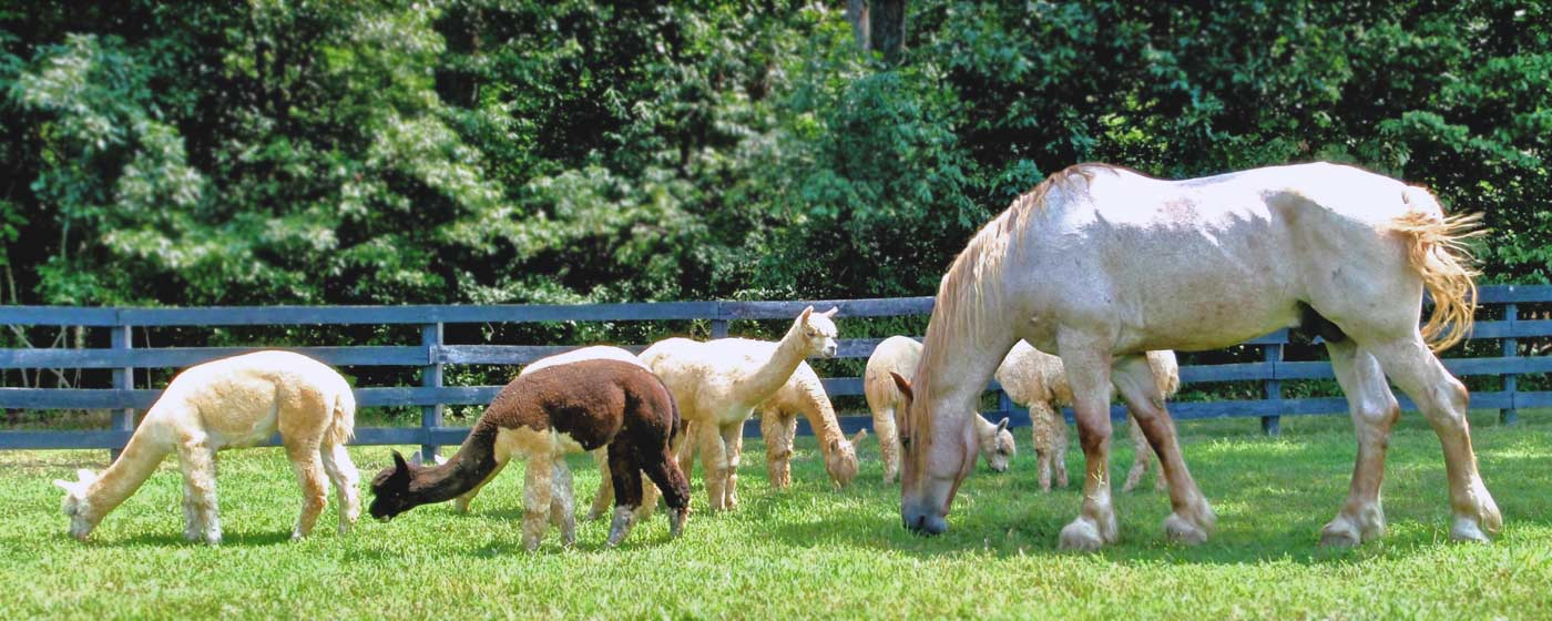 Virginia alpaca farming