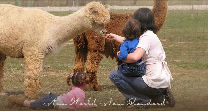 Alpacas are great with children
