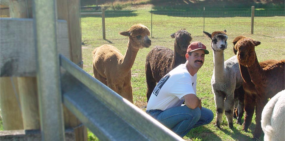 California alpaca farming