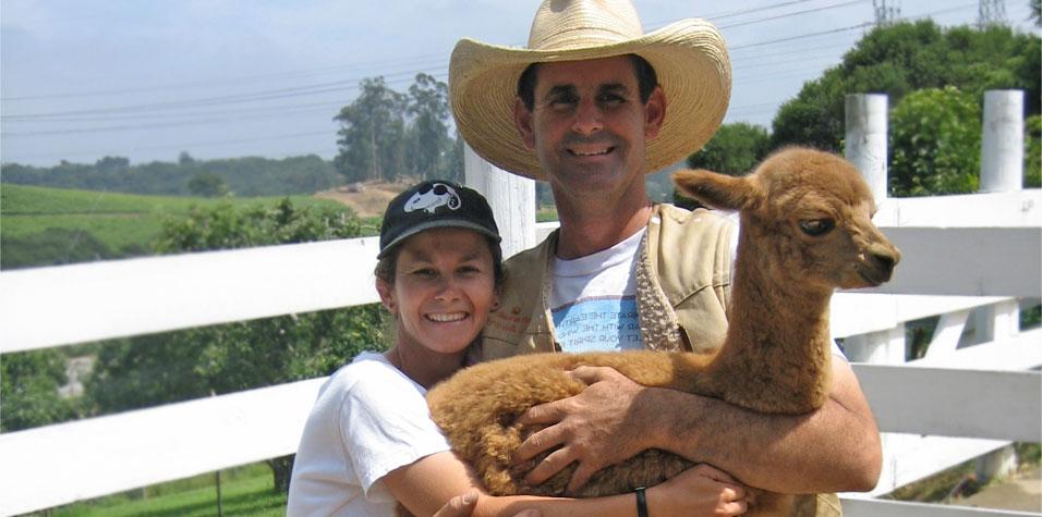 Alpacas for sale in California