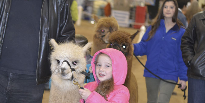 Alpaca farms in Oklahoma