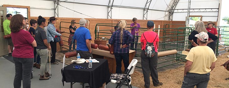 Alpacas for sale in WA, OR, ID, MT