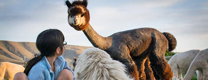 ID alpaca farms