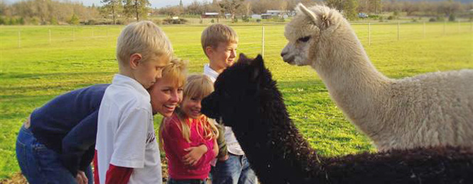 Alpaca Investing in Oregon and California