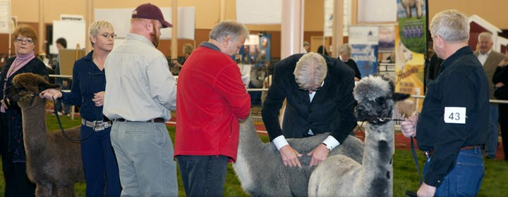 Ohio farmers and breeders of alpacas