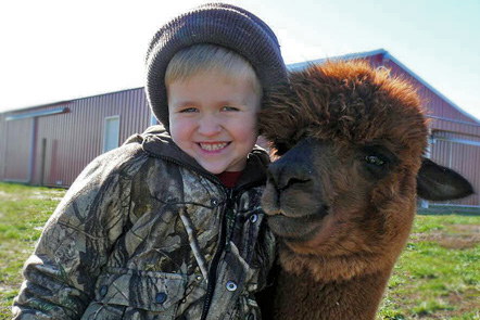 Alpaca family farming