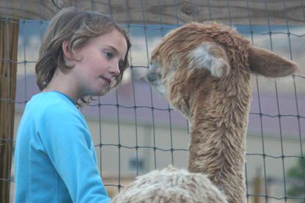 Alpaca fiber is a luxury fiber