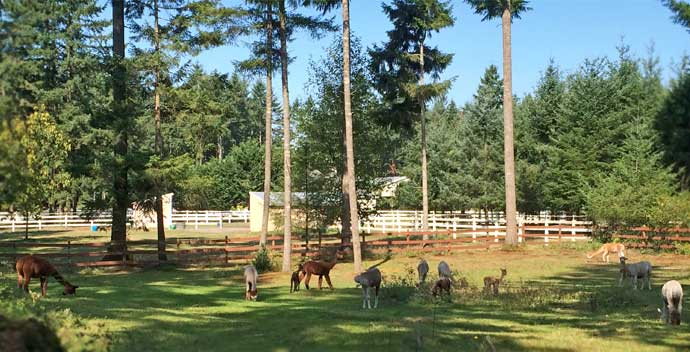 Washington, Oregon, Idaho, and Montana alpaca farms